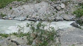 Rivière débordante de montagne par les roches Paysage de montagnes d'Altai Rivi?re d'Akkem banque de vidéos