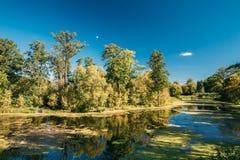 Rivière d'étang de lac landscape à l'été Sunny Evening Nature de la Biélorussie Images libres de droits