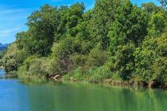 Rivière d'Aare en Suisse dans l'été Images stock