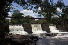 Rivière d'alligator image libre de droits