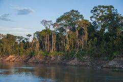 Rivière d'Amazone et forêt tropicale Photos libres de droits