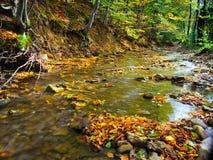 Rivière d'automne profondément dans la forêt image libre de droits