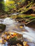 Rivière d'automne profondément dans la forêt photographie stock libre de droits