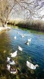 Rivière d'Azmak, Akyaka, Mugla, Turquie paradis de nature d'élément de conception de composition photos libres de droits