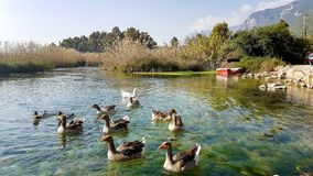 Rivière d'Azmak, Akyaka, Mugla, Turquie paradis de nature d'élément de conception de composition image libre de droits