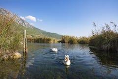 Rivière d'Azmak, Akyaka, Mugla, Turquie paradis de nature d'élément de conception de composition photographie stock libre de droits
