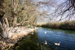 Rivière d'Azmak, Akyaka, Mugla, Turquie paradis de nature d'élément de conception de composition photo libre de droits