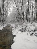 Rivière d'hiver dans la forêt photographie stock