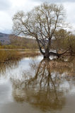 Rivière d'inondation de ressort Photographie stock libre de droits