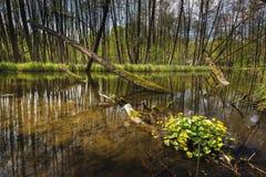Rivière Dajna près de Mragowo, Pologne photographie stock libre de droits
