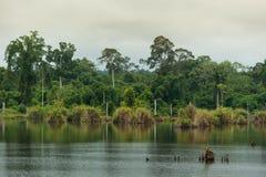 Rivière dans la forêt à feuilles caduques Images stock