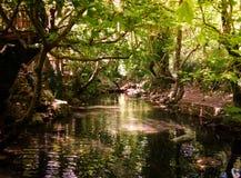 Rivière dans la forêt Images libres de droits