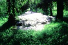 Rivière dans la forêt Photos libres de droits