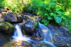 Rivière dans la forêt Photographie stock libre de droits