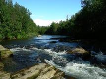 Rivière dans la forêt Image libre de droits