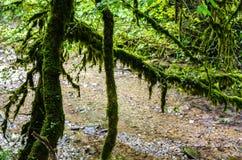 Rivière dans la forêt de jungle Images stock