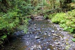 Rivière dans la forêt en parc national olympique, Washington, Etats-Unis photos libres de droits