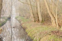 Rivière dans la forêt polonaise Photos libres de droits