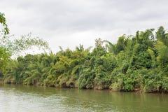 Rivière dans la forêt profonde Images stock