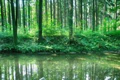 Rivière dans la forêt verte Image libre de droits