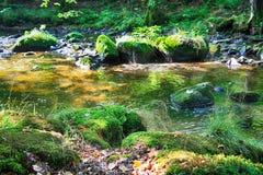 Rivière dans la forêt verte Image stock