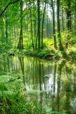 Rivière dans la forêt verte Photo libre de droits