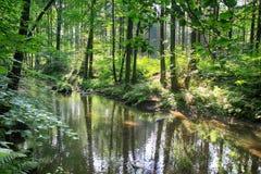 Rivière dans la forêt verte Photo stock