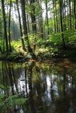 Rivière dans la forêt verte Photographie stock libre de droits