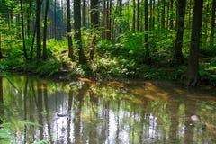 Rivière dans la forêt verte Photographie stock