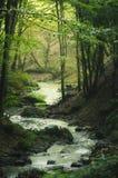 Rivière dans la forêt verte d'imagination photo libre de droits