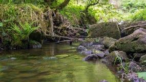 Rivière dans la perspective de grenouille en bois images stock