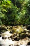Rivière dans les bois Image stock