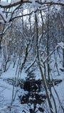 Rivière dans les bois Photos libres de droits