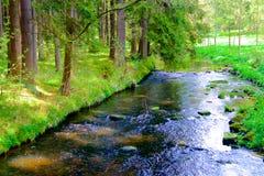Rivière dans les bois Photo libre de droits