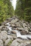 Rivière dans les montagnes Photos stock