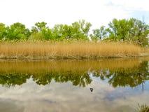 Rivière dans une forêt photographie stock libre de droits