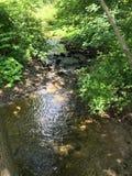 Rivière dans une forêt Image libre de droits