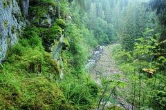 Rivière de Blanice en Bohême Images libres de droits