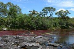 Rivière de Canio-Cristales en Colombie Photo libre de droits