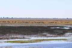 Rivière de Chobe Photographie stock libre de droits
