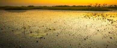 Rivière de Chobe image stock