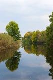 Rivière de courant autour des arbres et de la canne verts Photographie stock libre de droits