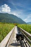 Rivière de Drau et itinéraire de cycle de drau Photo libre de droits