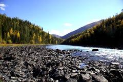 Rivière de forêt Images stock
