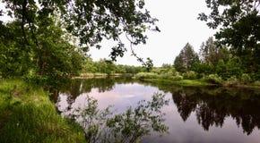 Rivière de forêt noire Image stock