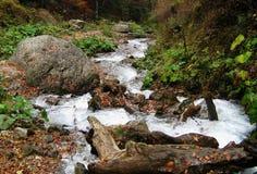 Rivière de Forrest Images stock
