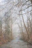 Rivière de glace dans la forêt Photos stock