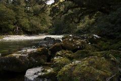 Rivière de Jackson. Région de Haast Photographie stock libre de droits