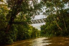 Rivière de Kinabatangan, forêt tropicale d'île du Bornéo, Sabah Malaysia Photos libres de droits