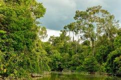 Rivière de Kinabatangan, Malaisie, Bornéo photographie stock
